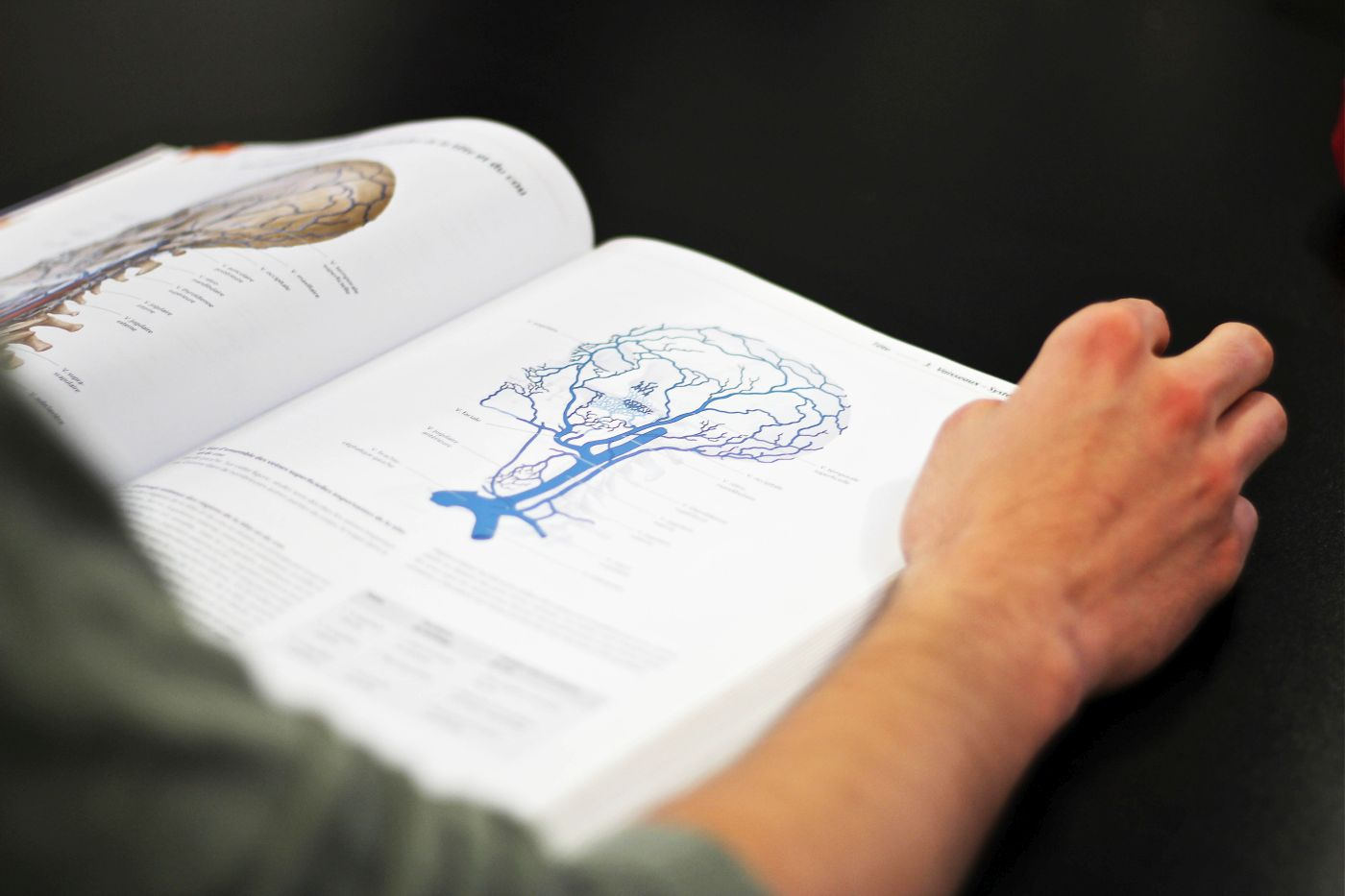 Livre anatomie